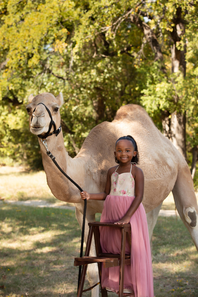 girl with a camel in the park in arlington tx