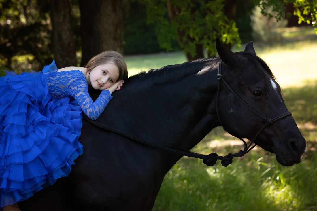 black horse with girl in blue couture gown in mansfield tx