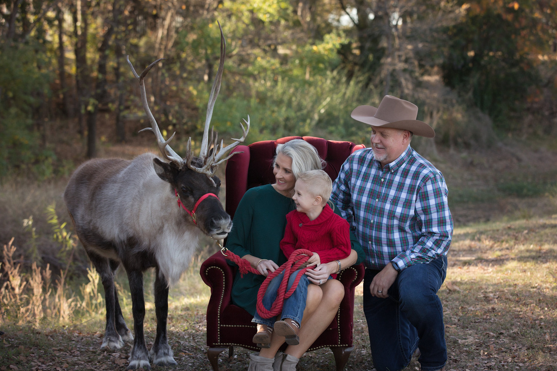 family watching the reindeer for a portrait